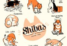 Shiba Inu screen prints for sale